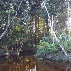 rose66-amazonia-inside-forest-river